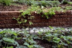 muurikivi pengerrys www.kevat.net