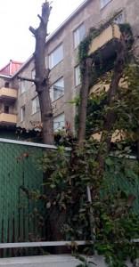 väärin leikattu puu