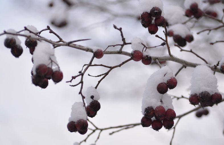 Pihan talvi – väripaletissa vain valkoinen ja harmaa??